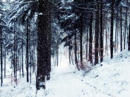 1 der winterzauberwald mit schneeflocken.jpg