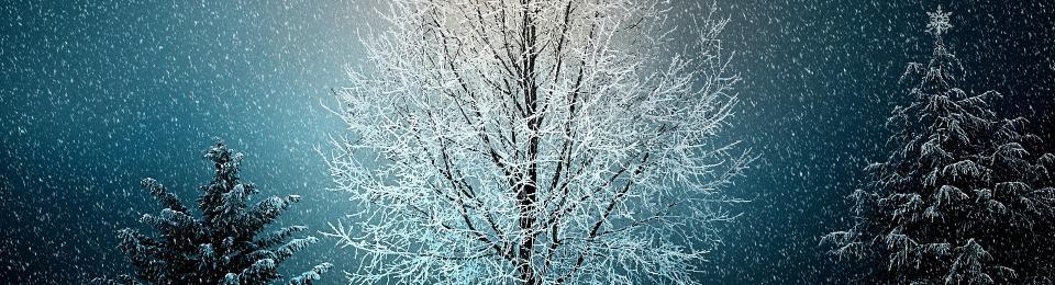 Der Kleine Stern Und Der Advent Im Wald Winterzeit
